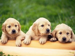 8 Tips You Need to Know About Raising a Puppy
